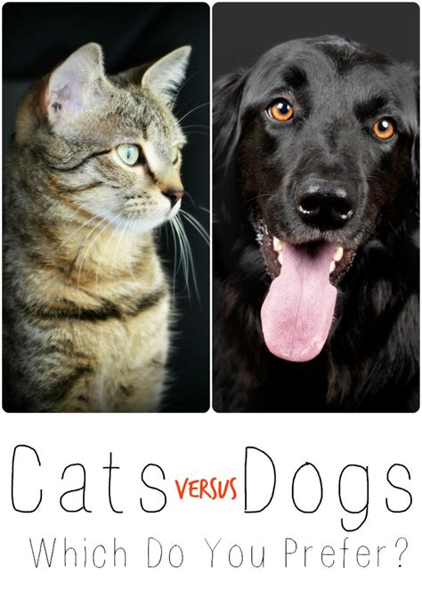 why do dogs always want food cats versus dogs which do you prefer bark time