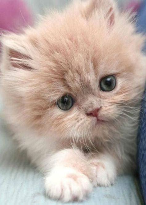 i love cats cute cat kitten pictures cute cat really cute kitten 27th february 2017 we love cats and