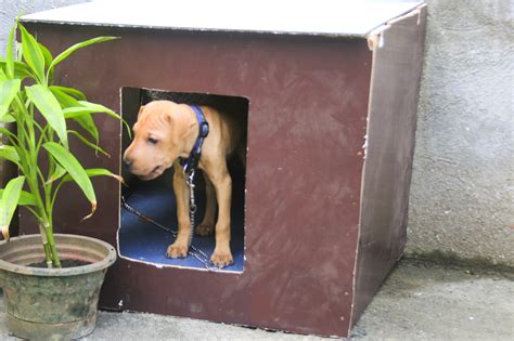 building a simple dog house how to build a simple dog house with pictures wikihow