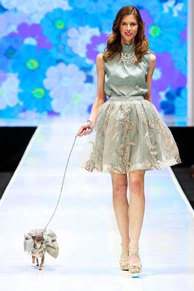 palm desert puppies 95 best images about catwalk dogs on rosetta getty poodles and wixson