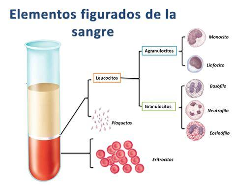 la sangre de los cuales son los componentes de la sangre por favor brainly lat