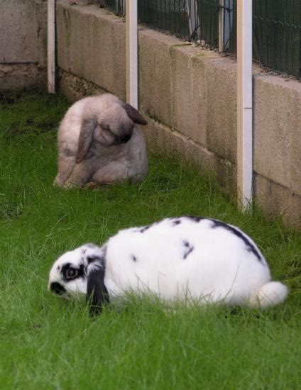coniglio nano in giardino per una casa a dimensione di coniglio aae onlus