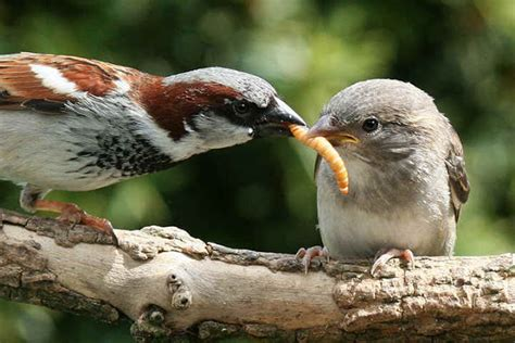 birds eating worms bugs and other grubs animals eating