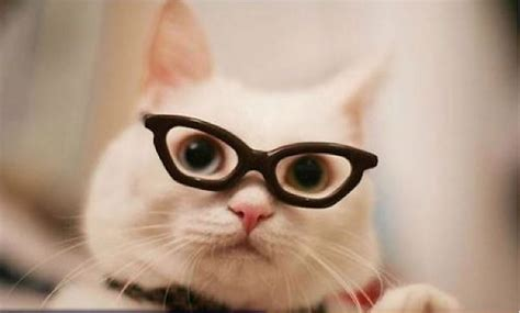 imagenes hipster gatos gatos hipster toman la internet alternopolis