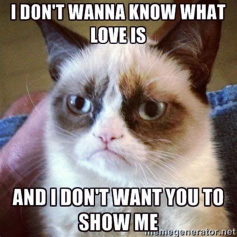 Grumpy Cat Love Meme - 16 of the best grumpy cat memes catster