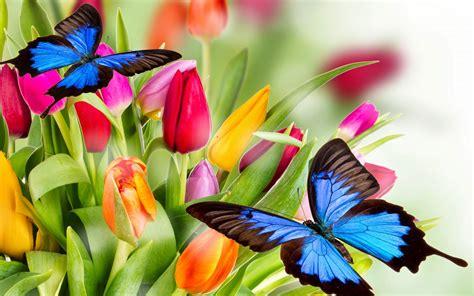flores azules claras mariposa imagenes de archivo imagen 2050474 hermosas mariposas azules y flores de colores fotos e