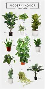 Best Plants For Office With No Windows Ideas 25 Best Ideas About Rubber Tree On Rubber Plant Green Plants And Indoor Tree Plants