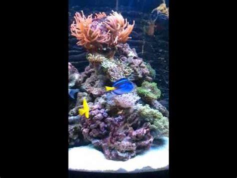 uv l zeeaquarium key led k3 100watt boven sera marin cube youtube