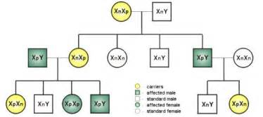 x linked color blindness pedigree for colour deficiency