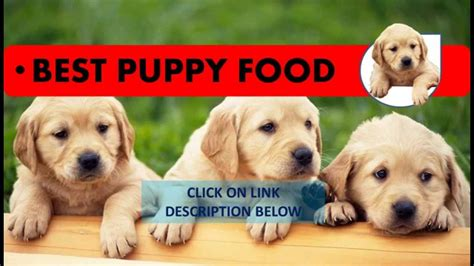 what is the best puppy food how to choose the best puppy food