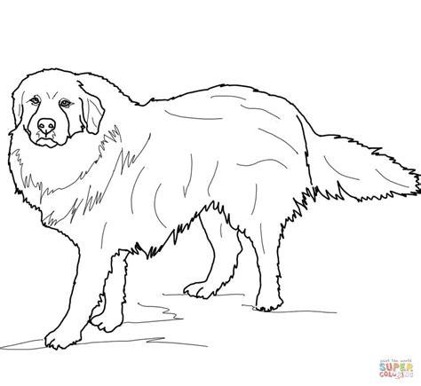 an australian shepherd puppy coloriage chien de montagne des pyr 233 n 233 es coloriages 224