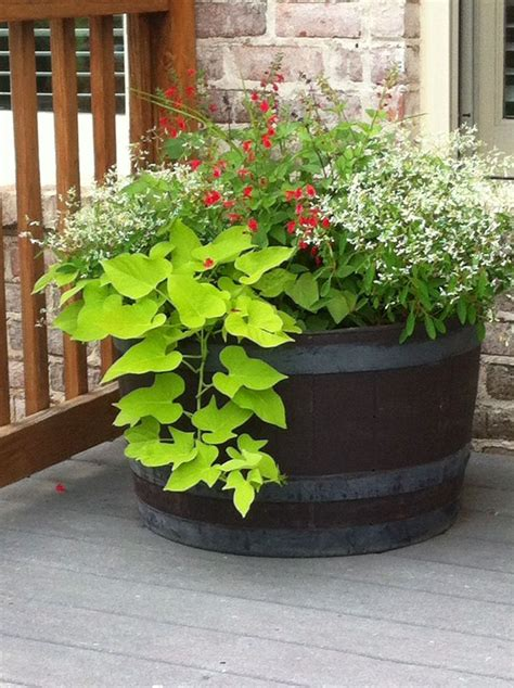 Planter Ideas Sun by 25 Best Ideas About Whiskey Barrel Planter On