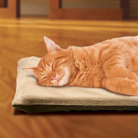 how to comfort a cat in heat sunbeam 174 heated pet pads