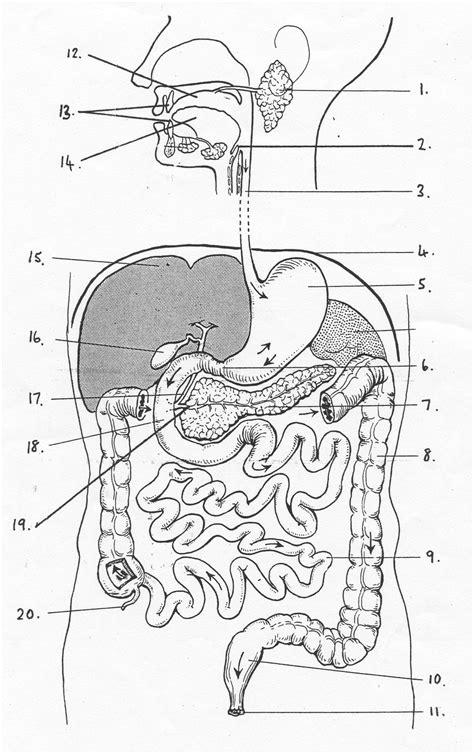 digestive system diagram quiz quia 2013 11 15 pre quiz digestive system structure