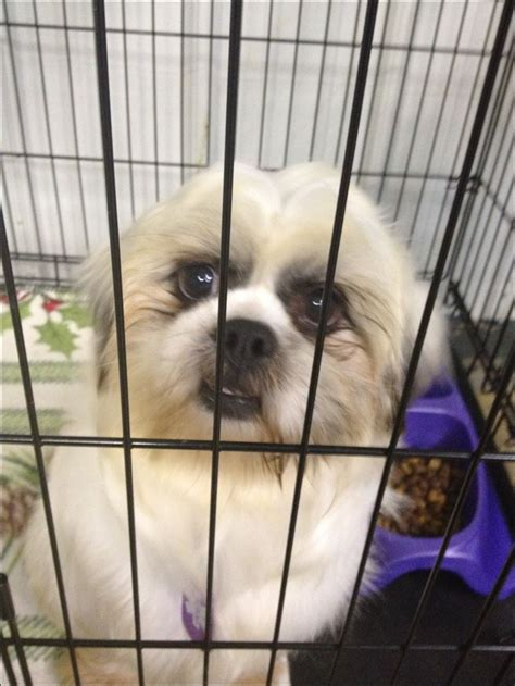 shih tzu puppy crate 34 rescued dogs from suspected puppy mill find sanctuary for in port