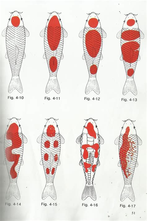 koi pattern meaning different kohaku koi pattern diagram photos visit link to