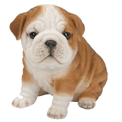puppy bulldog bulldog puppy garden