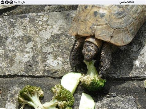 alimentazione tartarughe di terra piccole allevamento tartarughe di terra
