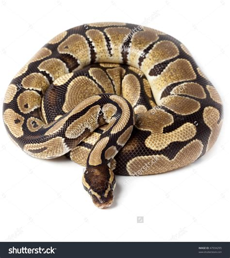python image python clipart clipground