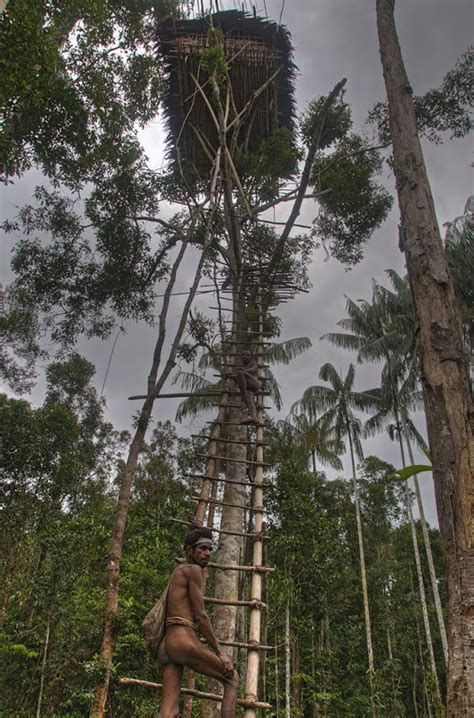 real treehouse the tree houses of the korowai tribe of new guinea