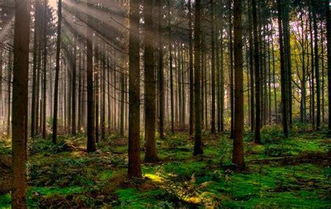 imagenes extrañas en el bosque bosque qu 233 son ubicaci 243 n geogr 225 fica y tipos de bosques
