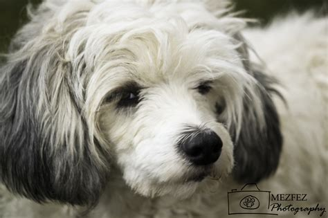paws dogs for adoption new gallery all 4 paws pet rescue