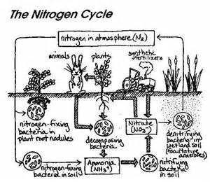 ib biology chemistry ib microbes and biotechnology option f