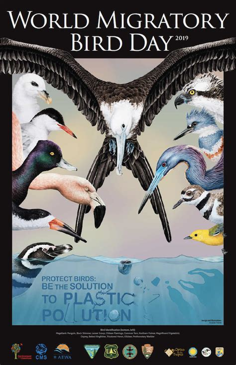 solution  plastic pollution  world migratory bird day rio blanco herald times