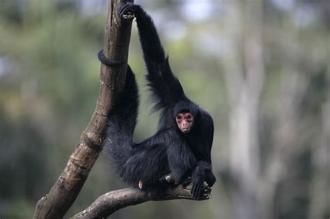 260515 in the forest hangs a poaching could reduce carbon storage of tropical forests