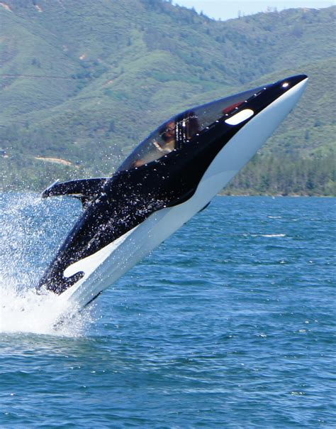 dolphin boat interesting news stories from your communities and the