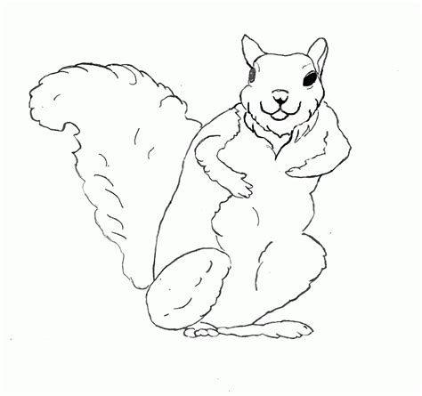 squirrel monkey coloring pages squirrel monkey coloring pages squirrel coloring page
