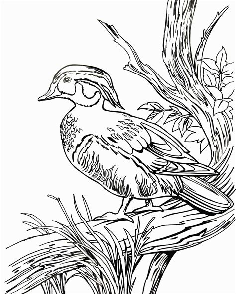 duck coloring pages getcoloringpagescom