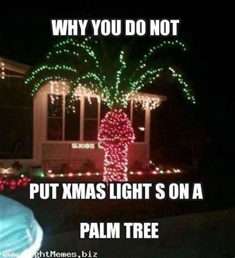 why not to put lights on a palm tree 28 images 1000