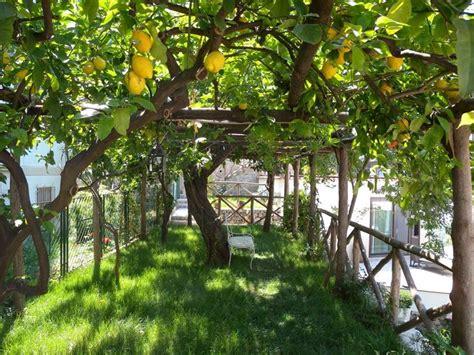 alberi giardino alberi per giardino alberi come scegliere gli alberi