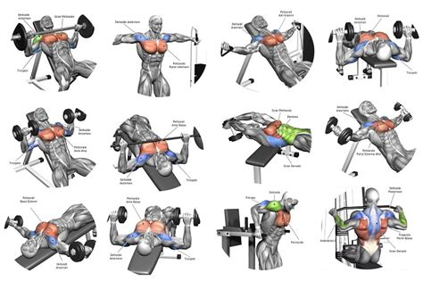 weight bench routine for beginners 5 tips for the best chest workout multiple fitness