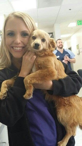 golden retriever rescue san diego 17 best images about animal rescue on san diego shelters and pets