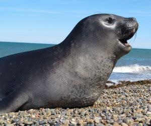 test animale sei risultato test animale sei foca