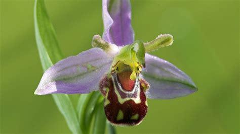 fiori particolari fiori particolari piante perenni fiori particolari