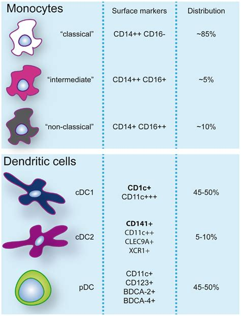 frontiers dendritic cells in the frontiers human dendritic cell functional specialization