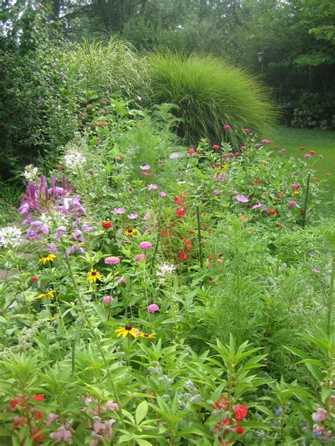 wild flower garden ideas photograph wildflower garden
