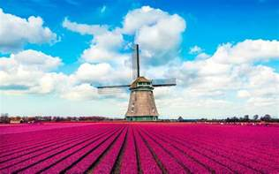 netherlands tulip fields tulip fields in europe are where you should celebrate