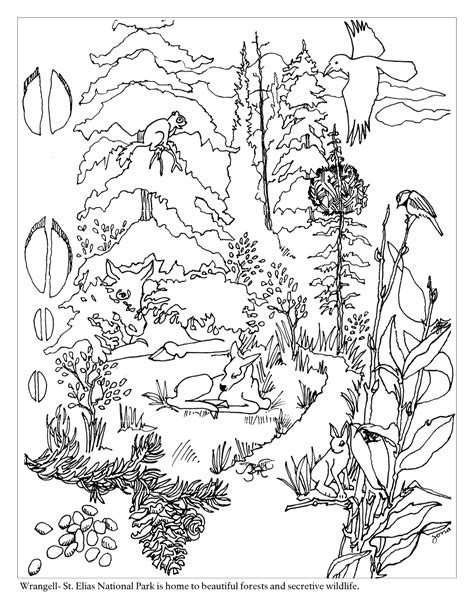 woodland animals an colouring book for dreaming and relaxing books forest coloring page for children coloring home