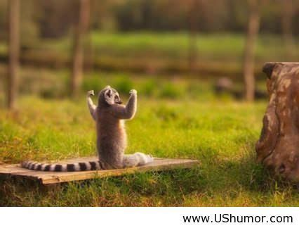 Related pictures king julien king julien official club 17129052 332