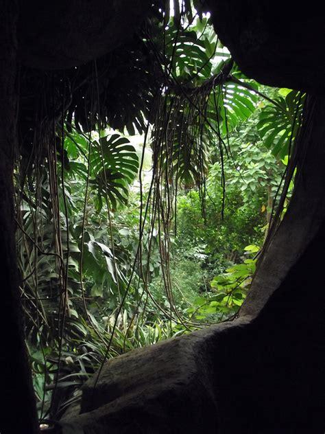 serre jardin des plantes grandes serres du jardin des plantes wikip 233 dia