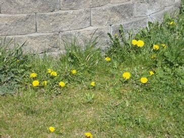 Kalk Im Garten Streuen by Mit Zeigerpflanzen N 228 Hrstoffmangel Im Rasen Feststellen Lagerhaus