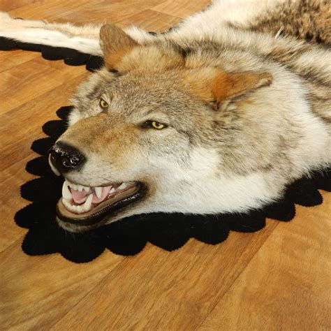 wolf rug for sale gray wolf taxidermy rug 13008 the taxidermy store