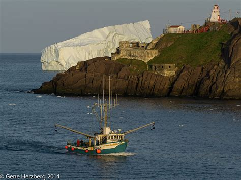 john s boat harbor fishing boat returning to st john s harbour fort amherst