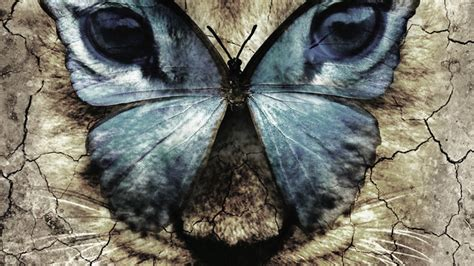 film butterfly lion michael morpurgo s the butterfly lion to tour uk