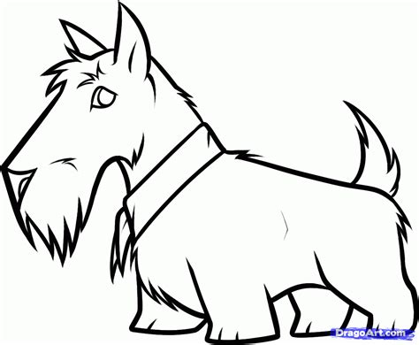 scottie dog coloring page how to draw a scottie dog scottie mania pinterest