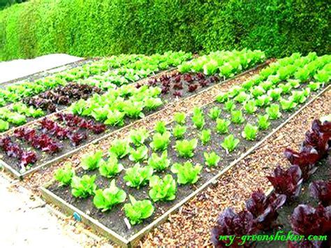 Simple Vegetable Garden Fence Ideas Archives Basic Vegetable Garden
